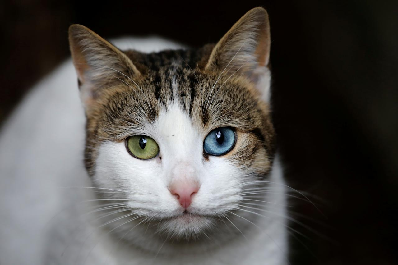 <p>A cat after being fed by a local resident on Jan. 11, 2018. (Photo: Goran Tomasevic/Reuters) </p>
