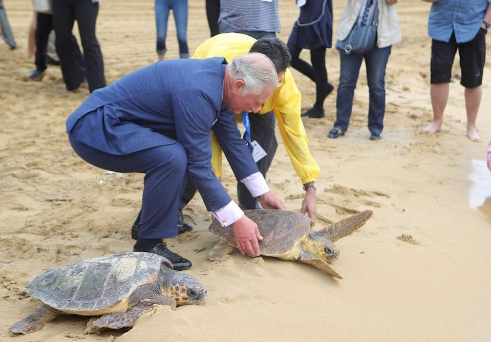 Charles releases a rehabilitated turtle into the sea in Malta (Steve Parsons/PA) (PA Archive)