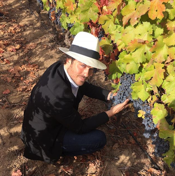 A photo of Ian Somerhalder wearing a white hat and kneeling down to hold a bunch of grapes at a vineyard.
