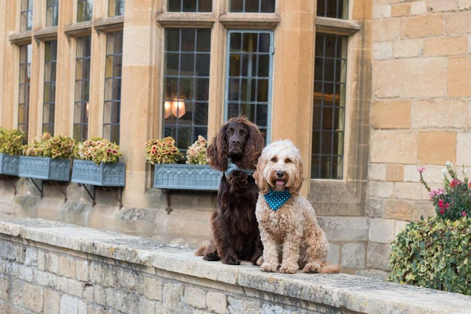 """<p>Canine guests of the Lygon Arms in the Cotswolds village of Broadway will be in good company – the hotel's previous patrons include Richard Burton and Elizabeth Taylor, as well as, a few hundred years previously, Charles I. Dogs are treated to their own wash station in the courtyard to restore them to their best after muddy walks in the surrounding Area of Outstanding Natural Beauty. The hotel has teamed up with Le Chameau for two dog-friendly packages, one of which includes a tweed Le Chameau bed to take home, treats cooked to a Michel Roux recipe, and a grooming experience finished with a bow or bandanna and a choice of perfume: Jimmy Chow or Jean Paw Gaultier. </p><p>For more information, visit <a href=""""https://www.lygonarmshotel.co.uk/sleep-over/dogs/the-ultimate-dog-escape-package/"""" rel=""""nofollow noopener"""" target=""""_blank"""" data-ylk=""""slk:lygonarmshotel.co.uk"""" class=""""link rapid-noclick-resp"""">lygonarmshotel.co.uk</a>.</p>"""