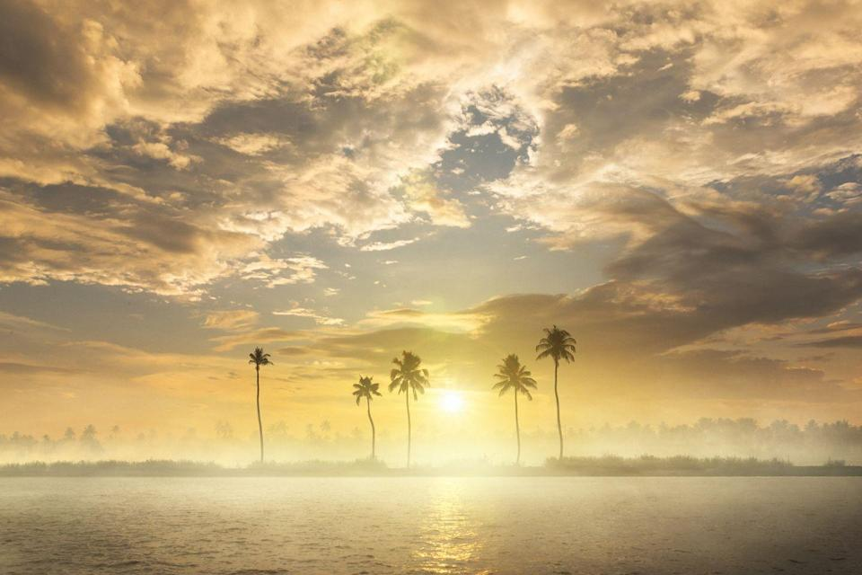 <p>A set of palm trees sit on the edge of the Kerala Backwaters – a waterway network of canals, rivers, and lakes that run parallel to the coast of the Arabian Sea. </p>