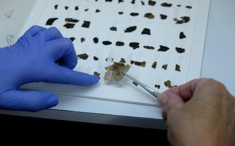 A worker of the Israeli Antiquity Authority sews fragments of the Dead Sea scrolls which includes biblical verses in a preservation laboratory of the Israel Museum in Jerusalem - Credit: Moment Mobile ED