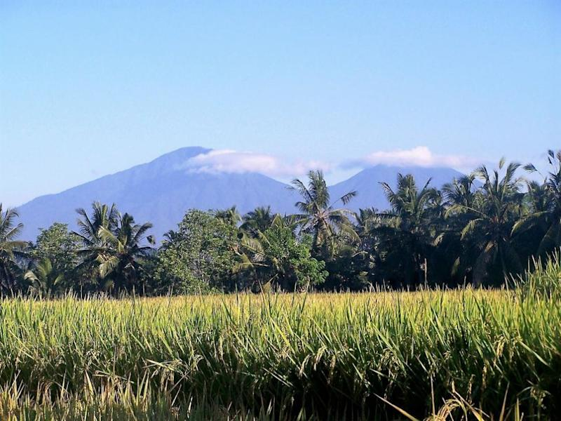 Catch the end of the rice harvest season in Bali. Photo: Supplied