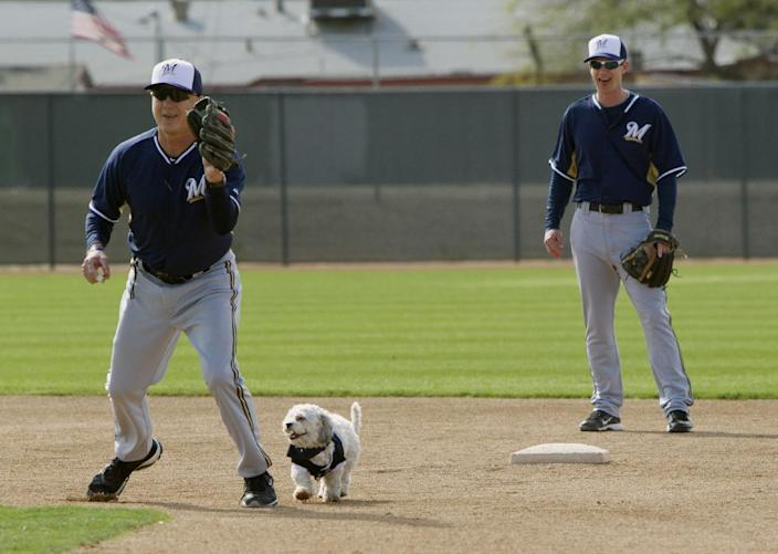 Hank, a stray dog that the Brewers recently found wandering their practice fields at Maryvale Baseball Park, helps instructor Bob Miscik field a ball during spring training on Friday, Feb. 21, 2014, in Phoenix. The team and staff have been taking care of Hank since he was found at the park on President's Day. Hank is named after Hank Aaron. (AP Photo/The Arizona Republic, Cheryl Evans) MARICOPA COUNTY OUT; MAGS OUT; NO SALES