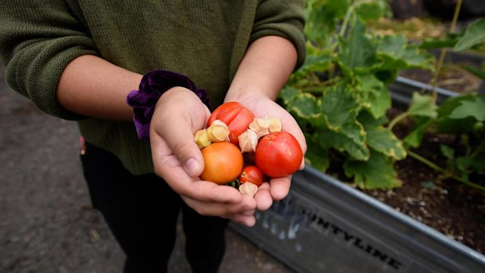 Immigrants and refugees grow foods from their home countries that might be unavailable in the United States. (Hannah Letinich)