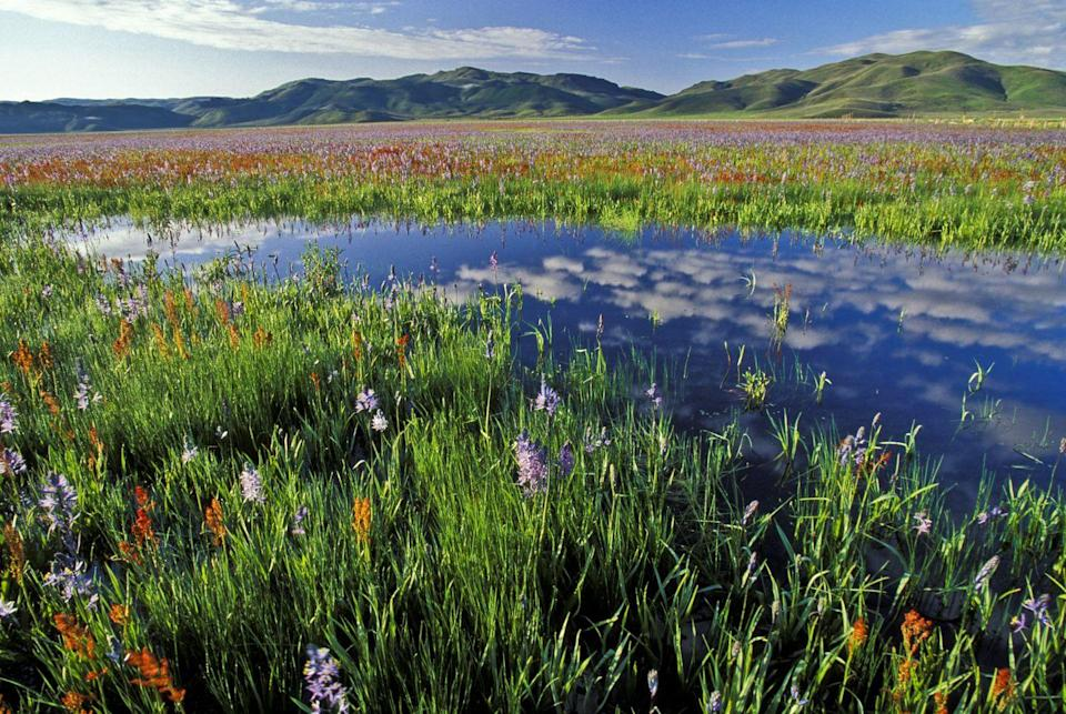 """<p>From April to June, Idaho's <a href=""""https://fishandgame.idaho.gov/ifwis/ibt/site.aspx?id=77"""" rel=""""nofollow noopener"""" target=""""_blank"""" data-ylk=""""slk:Camas Prairie Centennial Marsh"""" class=""""link rapid-noclick-resp"""">Camas Prairie Centennial Marsh</a> is the epitome of a wildlife sanctuary. The Camas Creek is completely filled, a field of purple camas lilies begins to bloom, and <a href=""""https://visitidaho.org/things-to-do/wildlife-viewing-birding/camas-prairie-centennial-marsh-wildlife-management-area/"""" rel=""""nofollow noopener"""" target=""""_blank"""" data-ylk=""""slk:waterfowl flock"""" class=""""link rapid-noclick-resp"""">waterfowl flock</a> to the marshy area. Consider this spot a must-see if you enjoy bird-watching.</p>"""