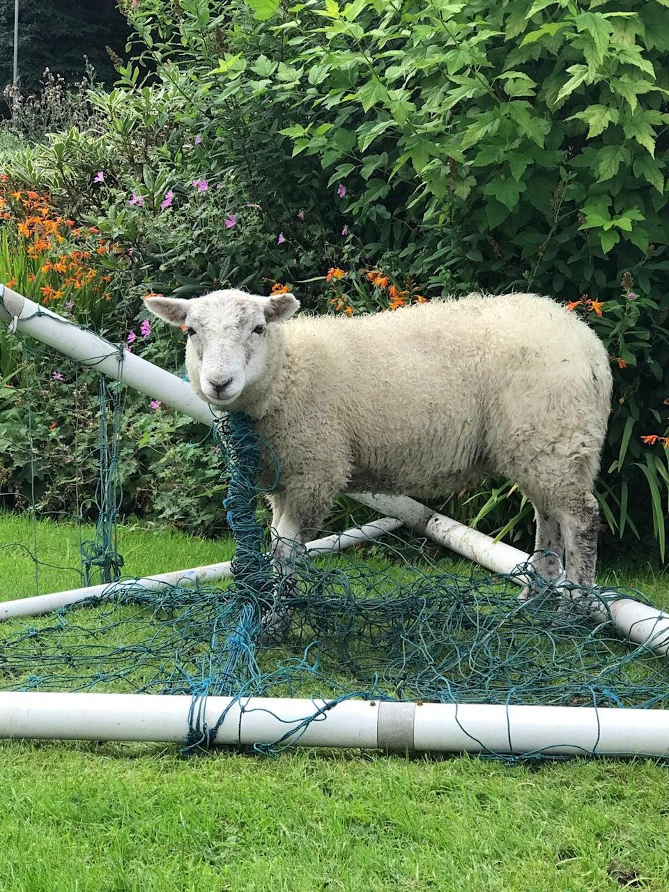 RSPCA rescue Lancashire dog from goal net (RSPCA/PA)