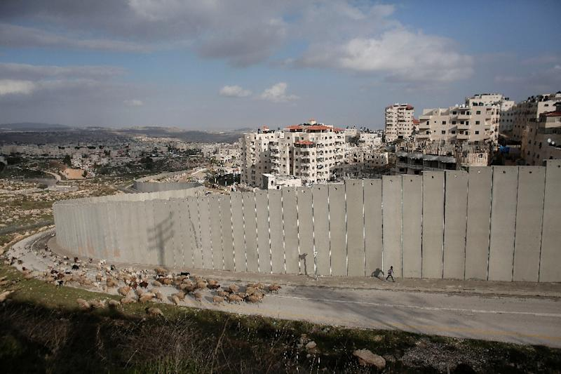 A young Palestinian shepherd leads his flock in front of Israel's controversial separation barrier near Shufat refugee camp and the settlement of Pisgat Zeev (background), in east Jerusalem on January 15, 2016 (AFP Photo/Ahmad Gharabli)
