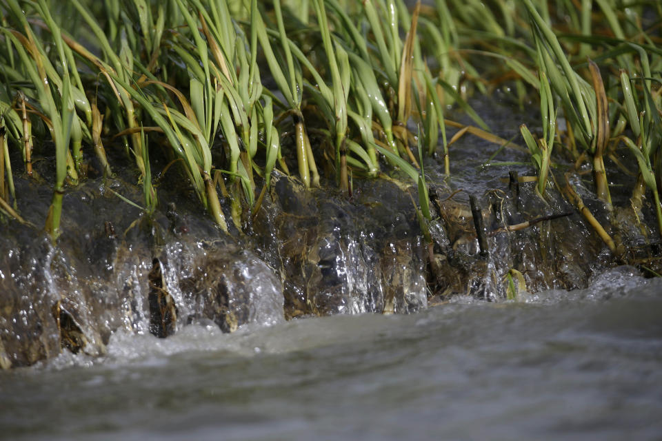 FILE - In this April 18, 2013 file photo, water is seen eroding marsh grass on a remnant of Cat Island, which was directly impacted by oil from the Deepwater Horizon oil spill, in Barataria Bay in Plaquemines Parish, La. Ten years after the nation's biggest offshore oil spill fouled its waters, the Gulf of Mexico sparkles in the sunlight and its fish are safe to eat. But scientists who have spent $500 million dollars from BP researching the impact of the Deepwater Horizon disaster have found much to be concerned about. . (AP Photo/Gerald Herbert, File)