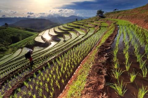 Rice fields in the countryside outside of Chiang Mai - Credit: narathip12 - Fotolia