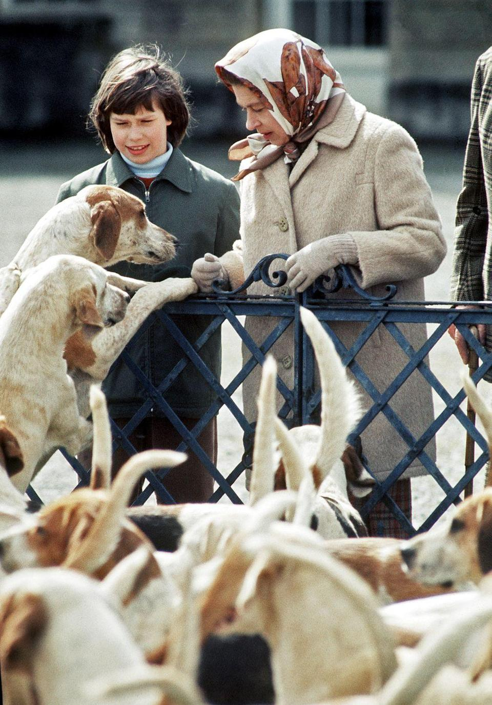 <p>Queen Elizabeth and Lady Sarah Armstrong-Jones (now Lady Sarah Chatto) meet the hounds at the Badminton Horse Trials.</p>
