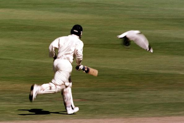 27 Nov 1999:  Australian batsman Justin Langer is accompanied by a stray seagull as he takes off down the wicket on his way to scoring 144 runs, during day two of the third test played between Australia and Pakistan at the WACA ground in Perth, Western Australia, Australia.  Mandatory Credit: Jack Atley/ALLSPORT