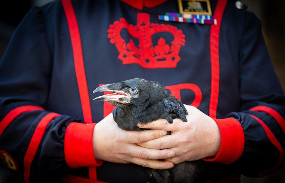 <p>At least six ravens must be at the Tower of London at all times</p> (PA)