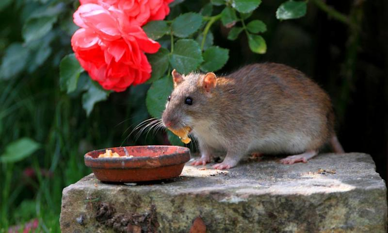 Feeding any animals in a garden is an invitation to rodents.