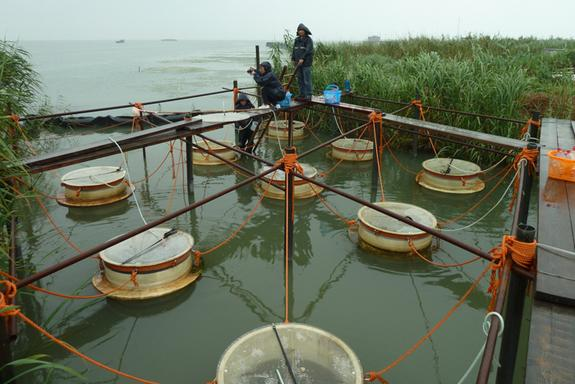 Researchers conduct experiments on a cyanobacterial bloom in Lake Taihu, China