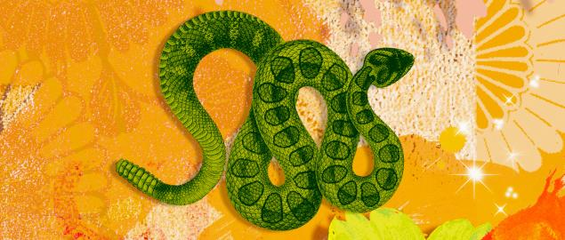 Montage of the Chinese year of the Snake