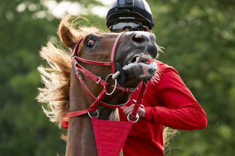 Belmont Stakes entrant France Go De Ina reacts after a training run on the main track ahead of the 153rd running of the Belmont Stakes horse race, Wednesday, June 2, 2021, at Belmont Park in Elmont, N.Y. (AP Photo/John Minchillo)