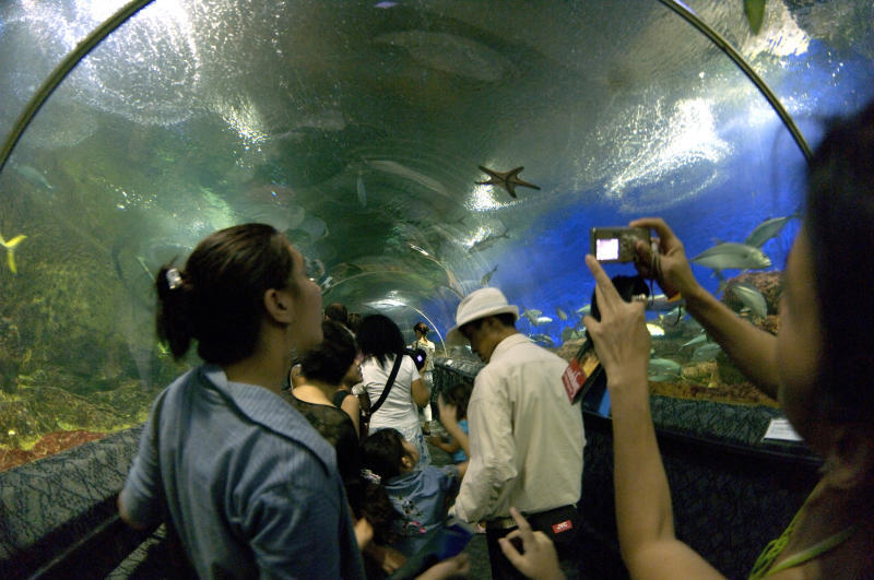 SINGAPORE - 2005/08/15: Underwater show at Santosa island. This unique facility feature an underpass below the water tank where hundreds of shraks swim among other species.. (Photo by Roland Neveu/LightRocket via Getty Images)