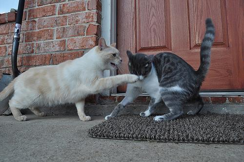 """<div class=""""caption-credit"""">Photo by: Photo credit: Brilhasti1 