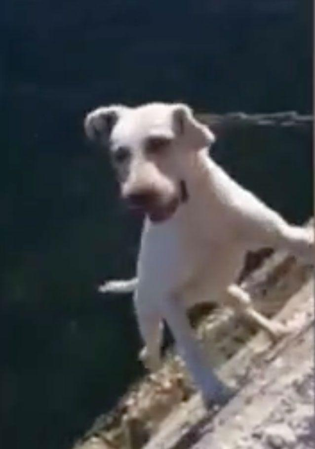 A video of this dog went viral last year. Photo: on.cc