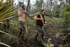 Two men walk through a wooded area carrying a long python over their shoulders.