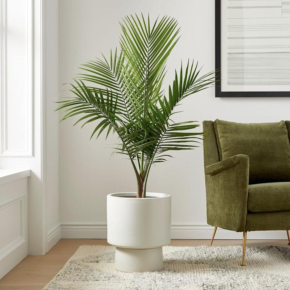 <p>If you have a big bedroom, the <span>Live Majesty Palm Plant</span> ($40) is a win-win as it eliminates bad toxins in the air while remaining toxic-free for your pets.</p>