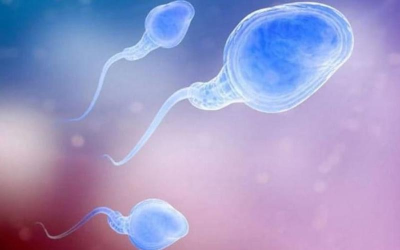 Some men are infertile because of defective protein - Telegraph