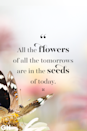 <p>All the flowers of all the tomorrows are in the seeds of today.</p>