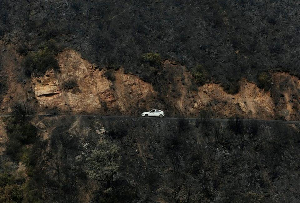 A car drives through a charred forest in the Kabyle region of Algeria last month (AP)