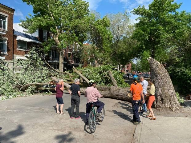A tree fell across Aird Avenue, just south of Ontario Street, on Wednesday as wind gusts picked up. Nobody was injured in the incident.  (Mathieu Wagner/Radio-Canada - image credit)