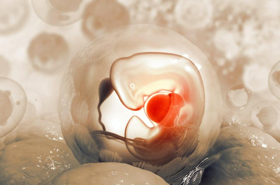 """<span class=""""caption"""">Human embryo research is used to understand foetal development and its applications in treating or eliminating disease.</span> <span class=""""attribution""""><span class=""""source"""">(Shutterstock)</span></span>"""