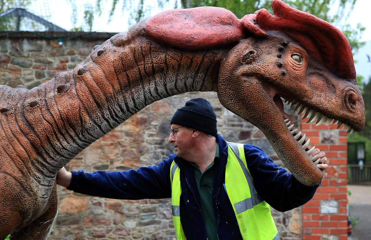 An anamatronic Dilophosaurus dinosaur is moved from a lorry as it arrives at Bristol Zoo Gardens on May 14, 2012 in Bristol, England. Twelve animatronic dinosaurs arrived at Bristol Zoo Gardens this morning after being transported in crates from Texas, USA. They will form part of the zoo's summer exhibition 'DinoZoo' which opens later this month. (Photo by Matt Cardy/Getty Images)