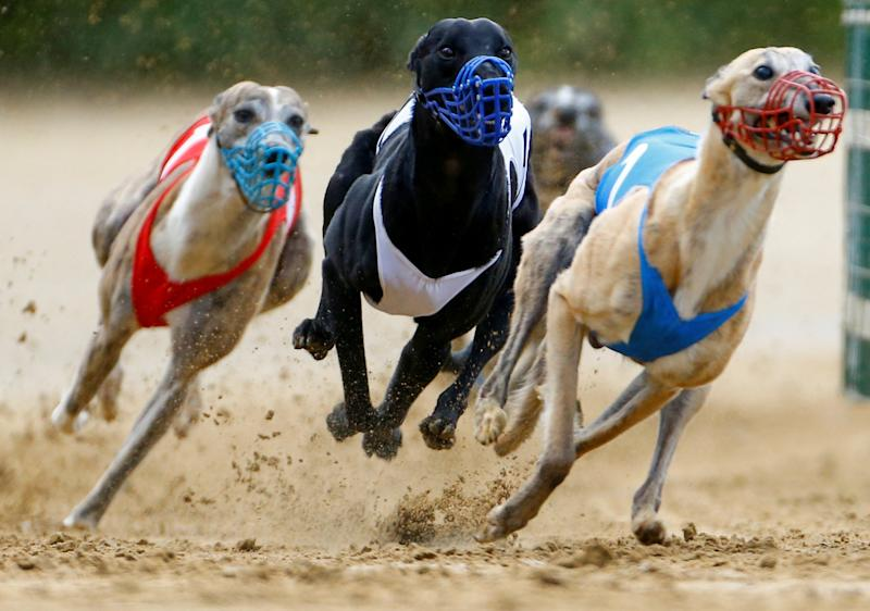Charities demand end to greyhound racing after 1,000 deaths last year