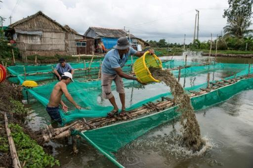 Rice to riches: Vietnam's shrimp farmers fish for fortunes