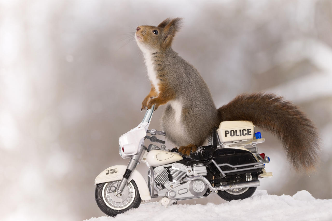 <p>Spotting a couple of toy bicycles in the snow, the little creatures wasted no time hopping on board. (Photo: Geert Weggen/Caters News) </p>
