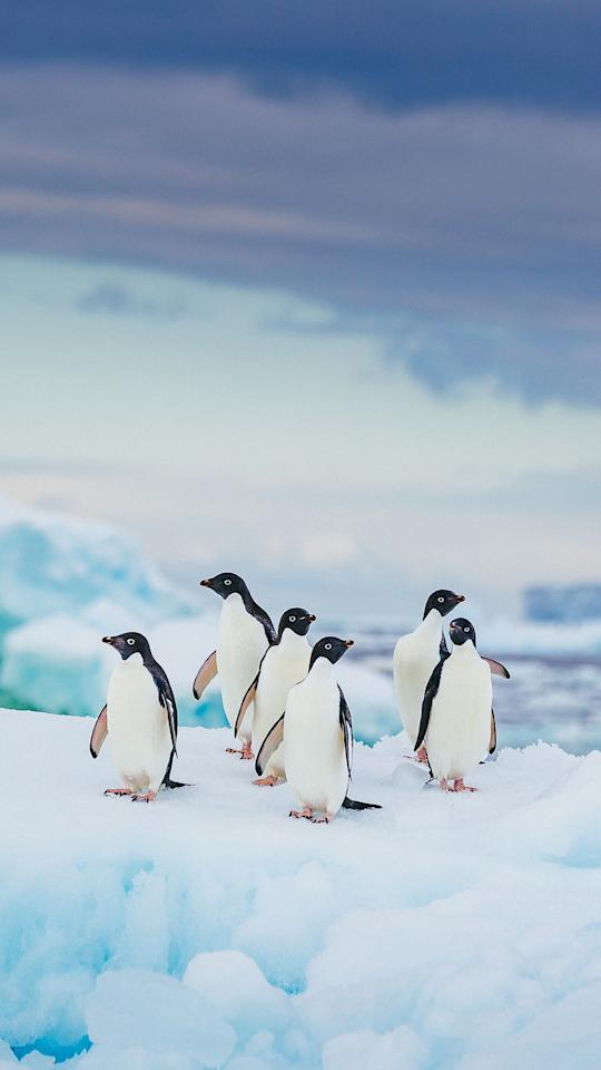 """<p>Estimates usually fall in the <a rel=""""nofollow"""" href=""""https://www.smithsonianmag.com/science-nature/14-fun-facts-about-penguins-41774295/"""">range of 17 to 20</a>, as there's still some debate over whether similar types of penguins (like rockhoppers) actually count as <a rel=""""nofollow"""" href=""""https://www.goodhousekeeping.com/life/pets/g3643/state-animals/"""">different species</a>. </p>"""