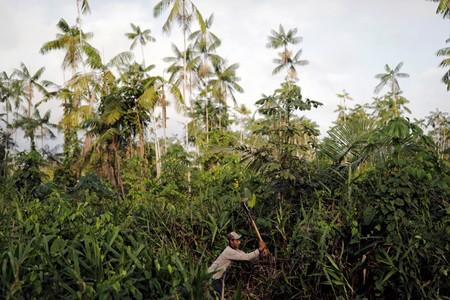 A man works in the field at the Virola-Jatoba PDS in Anapu