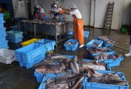 Workers clean freshly caught squid in Pucusana, Peru, Monday, Sept. 20, 2021. To compete with the Chinese, the local fishermen of Pucusana assume ever-greater risks, venturing farther out from home and spending as much as a week at sea to haul in what they used to catch in a single day close to shore. (AP Photo/Martin Mejia)