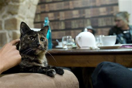 "Customers enjoy a beverage as a cat relaxes on an armchair at the ""Cafe des Chats"" days before the inauguration in Paris"