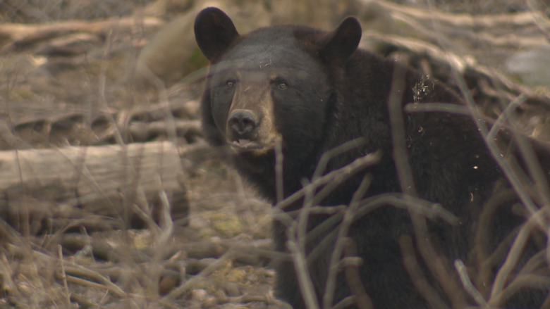 'It's a joke:' Poacher's fines and jail time not enough say hunting guides