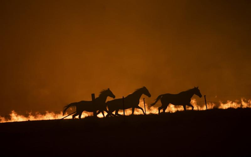 The fires have been described as an 'ecological disaster', with 119 species requiring immediate assistance to avoid extinction - Brook Mitchell/Getty Images AsiaPac