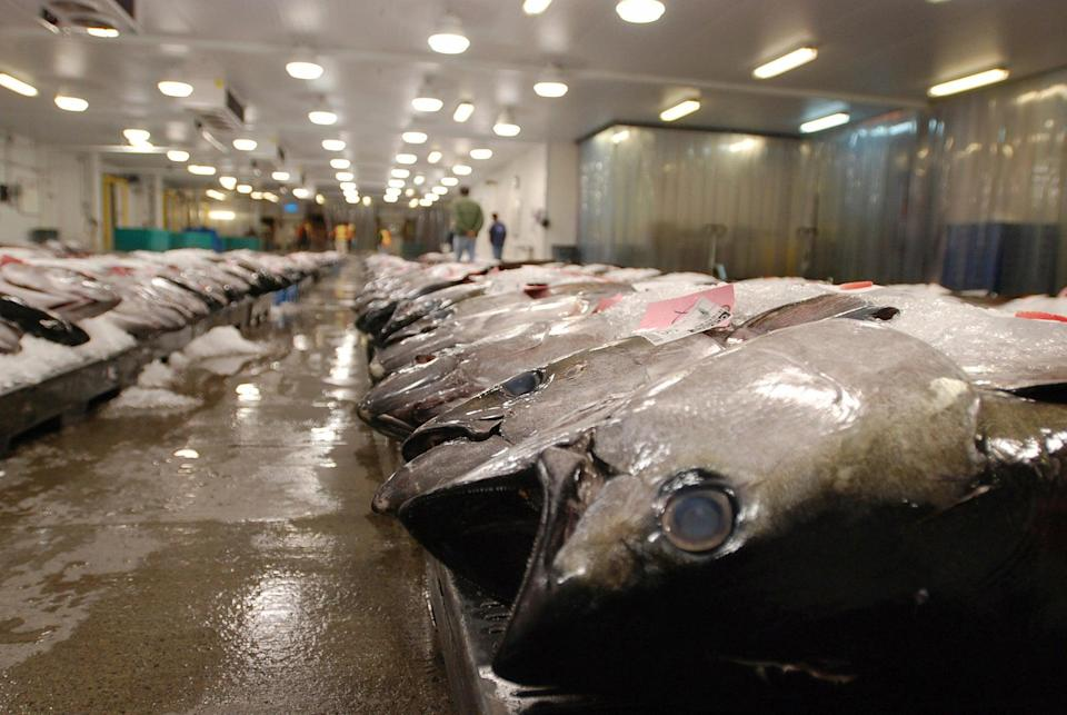Forced Labor Fishing (Copyright 2016 The Associated Press. All rights reserved. This material may not be published, broadcast, rewritten or redistribu)