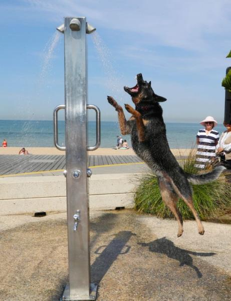 A dog cools off under a shower at St Kilda beach as a heat wave sweeps across Victoria