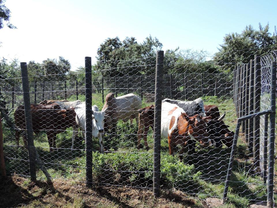 Enclosure built using recycled plastic poles to protect livestock (Mara Predator Conservation Programme/PA)