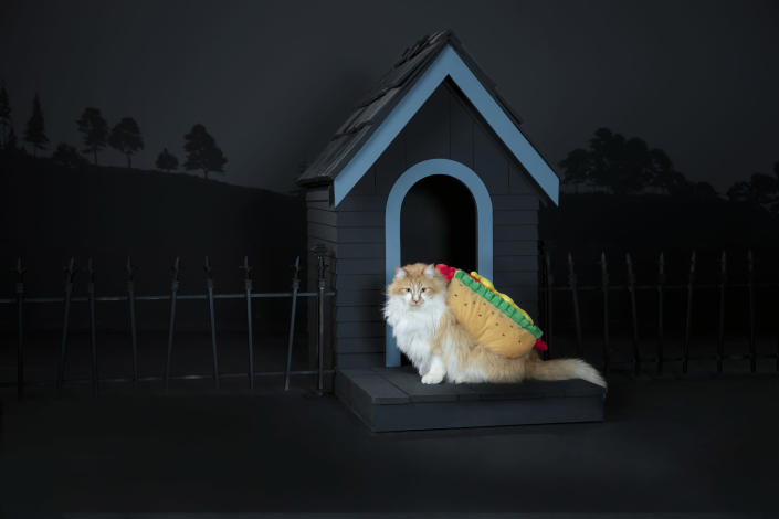 PetSmart's Halloween costume collection features a variety of costumes for cats including a delicious hot dog.