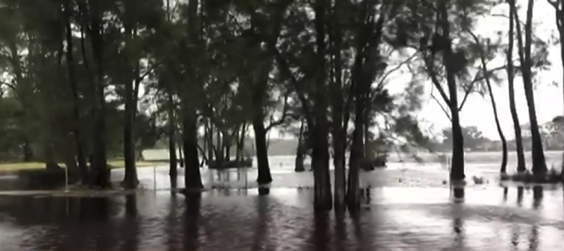 Several rivers across the NSW South Coast have flooded. Pictured is water swamping trees.