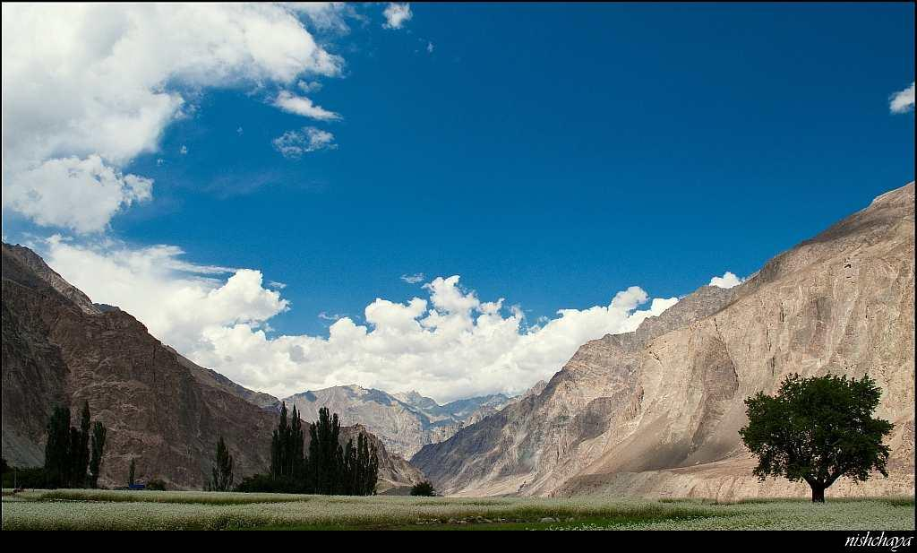 A postcard-perfect view of Turtuk in Nubra Valley, Ladakh.
