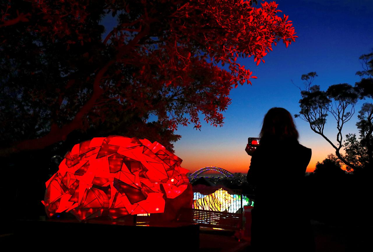 A woman uses her iPhone to take photographs of illuminated sculptures shaped as animals during a preview of Vivid Sydney, promoted as the world's largest festival of light, music and ideas, at Sydney's Taronga Zoo in Australia, May 20, 2018. The festival will run for 23 days, starting on May 25.    REUTERS/David Gray     TPX IMAGES OF THE DAY