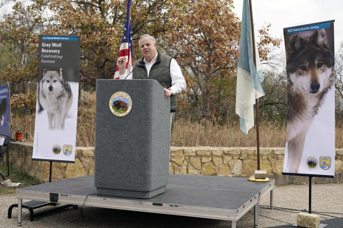 """Flanked by photos of gray wolves, Interior Secretary David Bernhardt announces the gray wolf's recovery """"a milestone of success"""" during a stop at the Minnesota Valley National Wildlife Refuge, Thursday, Oct. 29, 2020, in Bloomington, Minn. The move stripped Endangered Species Act protections for gray wolves in most of the U.S., ending longstanding federal safeguards and putting states and tribes in charge of overseeing the predators. (AP Photo/Jim Mone)"""