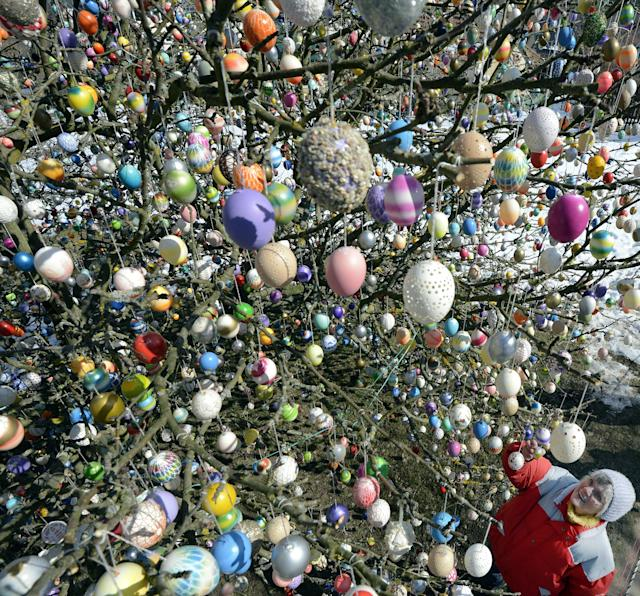 SAALFELD, GERMANY - MARCH 24: Pensioner Christa Kraft stands in front of her apple tree, which she and her family have decorated with 10.000 Easter eggs on March 24, 2013 in Saalfeld, Germany. The family started decorating an apple tree with painted hen's eggs in their garden in 1965 as amusement for child and grandchildren, now it is an attraction that draws thousands of visitors and tourists to the garden of the family. (Photo by Thomas Lohnes/Getty Images)